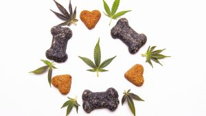 Dog treat icons floating around hemp leaves in a white background