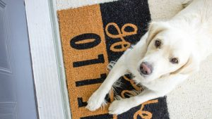 White dog lying on a white and black doormat