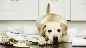 Dog lying on a mess of things that it broke