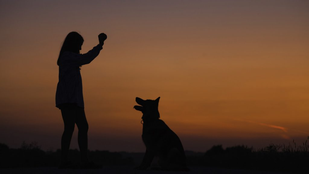 Woman training her dog by the beach during sunset