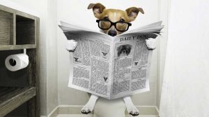 small dog reading newspaper in the bathroom